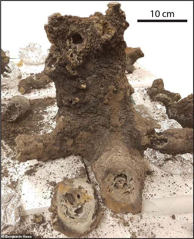 White Chunks In Poop : white, chunks, Lightning, Bolts, 'unlocked, Phosphorus, Necessary, Creation, Daily, Online