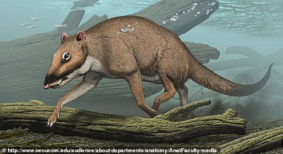 The largest animal on Earth swims through the depths of the oceans, but 50 million years ago whales walked the surface on four legs.  A professor at Northeast Ohio Medical University says the giant creatures are the descendants of an old  'little deer,' called Indohyus