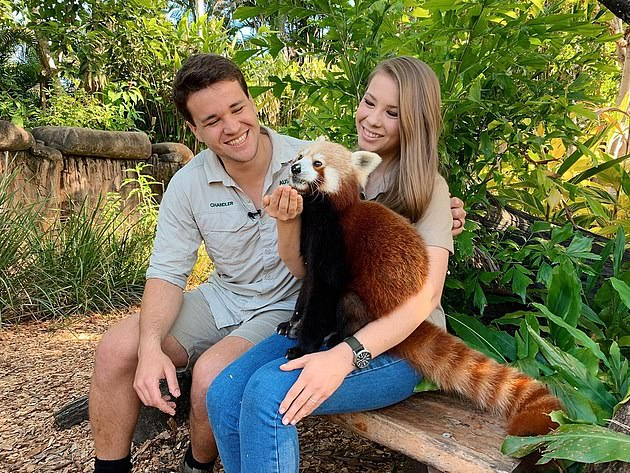 Panda Protection: On Thursday, Bindi uploaded a photo to her main grid in which her stomach was concealed by a red panda named Ravi