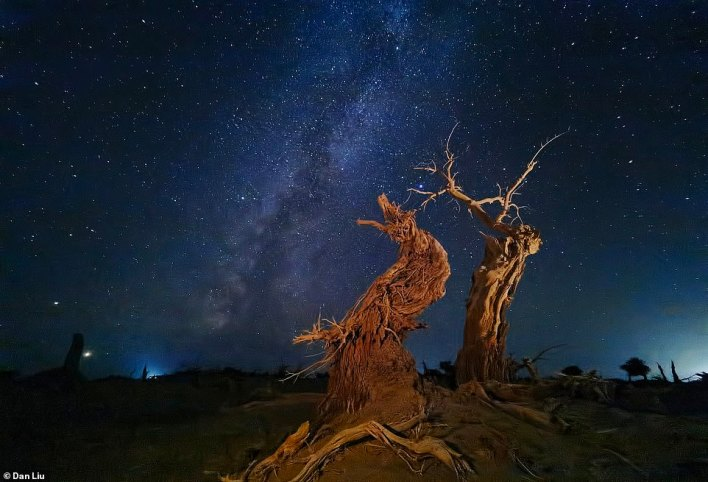 Another incredible image by Dan Liu taken on his iPhone 11 Pro Max. It shows a dead Euphrates Poplar tree under a blanket of stars in Inner Mongolia