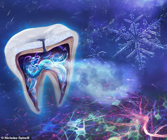 Experts from the US and Germany have finally gotten to the root of this pain ¿ captured in this artwork ¿ identifying the specific cells in teeth, odontoblasts, that sense cold temperatures