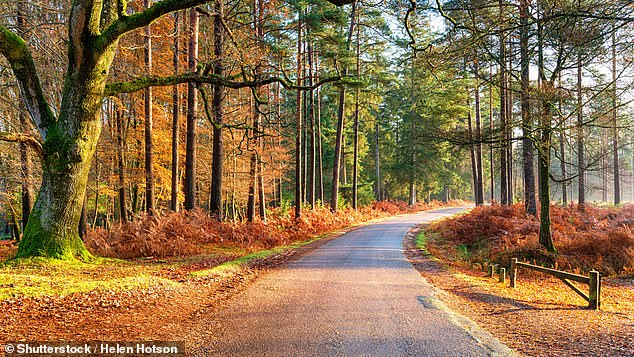 Hire a 'Trekker' Fiat motorhome from Just Go and head to a campsite in the New Forest, pictured