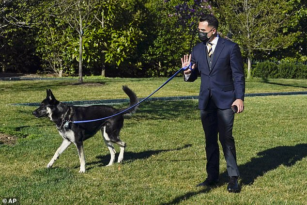 As President Joe Biden and first lady Jill Biden left the White House for the brief excursion, a handler was walking Major Biden outside