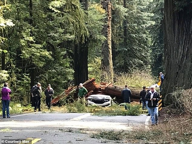Jessica and Jake Woodruff were driving on Thursday down Route 199 toward the coast in Northern California when the 175-foot-tall tree crashed down on their 2016 Honda Accord