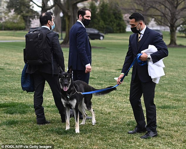 Major appeared on the South Lawn on Wednesday morning - two days after he bit a National Park Service employee