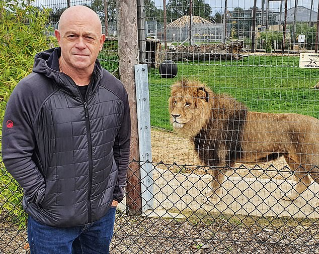 Even Ross Kemp (above) was obviously appalled by such magnificent beasts being kept in back-garden enclosures right next to, in one instance, the M1