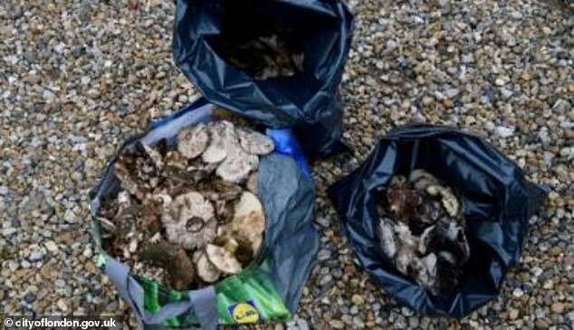 A total 27 people were slapped with an £80 fine, with some carrying more than 11lbs of mushrooms away from Epping Forest in Essex