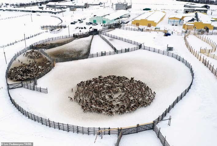 The drone camera captureda second reindeer cyclone in a nearby enclosure