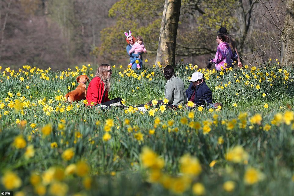 An easter bunny is seen among the daffodils in Sefton Park in Liverpool, as families make the most of the sunshine