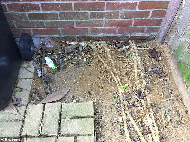 Bamboo roots and rhizomes can spread out up to 30ft and if left untamed can cause significant risk to property and structures