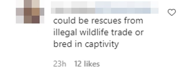 Perhaps?'Could be rescues from illegal wildlife trade or bred in captivity,' one fan wrote