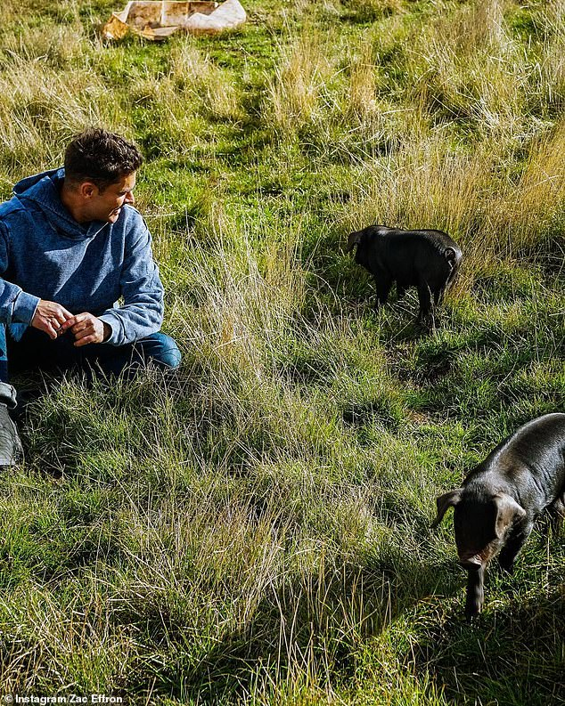 Too cute:Zac visited the Jonai Farms and Meatsmiths in Eganstown, Victoria, on Tuesday as he continues his tour of Australia while filming Netflix travel series Down to Earth