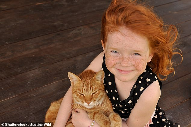 Gingers, the rarest of human hair colours, like all people have a receptor on their melanocytes called melanocortin 1 which mediates production of dark skin pigment. But in redheads it is faulty. This leads to a hormone level different to people of other complection and results in an elevated pain threshold (stock)