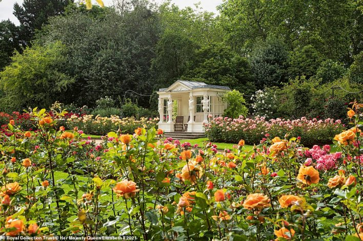 Some 24,000 guests usually traipse over the grass in the summer during the Queen's three garden parties, leaving the lawn in need of repair. Pictured: Buckingham Palace's rose garden