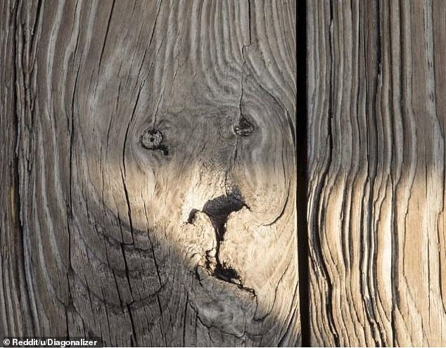 Wild! This user, from an unknown location, shared a photo of what looked like a lion's face in a wooden table
