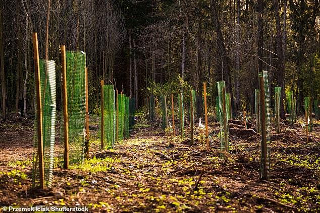 El nuevo Forest Saver de Oxbury Bank utilizará los pagos de intereses de los ahorradores para plantar árboles