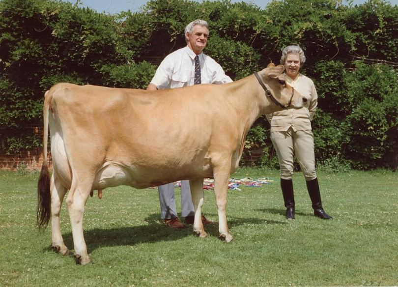 The Queen at Windsor Castle in 1992 with a cow called Elizabeth. The Queen is known for her love of horses, cattle farming and corgis