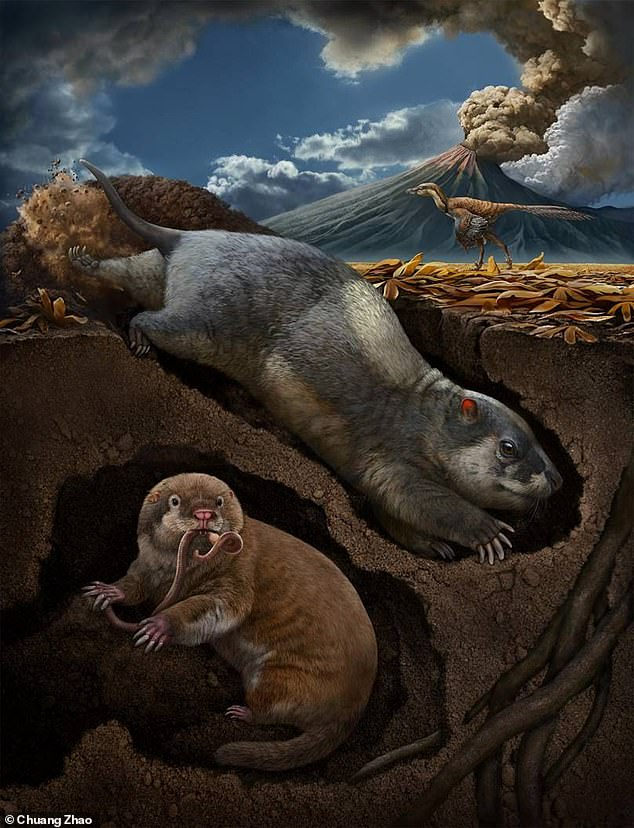 Artist's impression shows Fossiomanus sinensis (upper right) and Jueconodon cheni in burrows. Both lived the Early Cretaceous Jehol Biota (about 120 million years ago), northeastern China, and showed skeletal features adapted to burrowing lifestyle