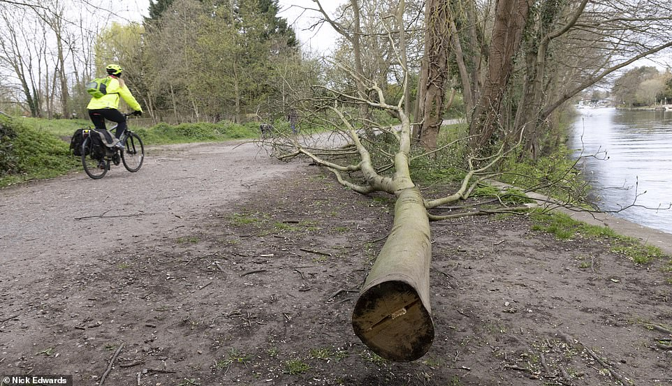 Heavy branches have been left strewn over the road, obstructing traffic, and dumped in the Thames throughout this month