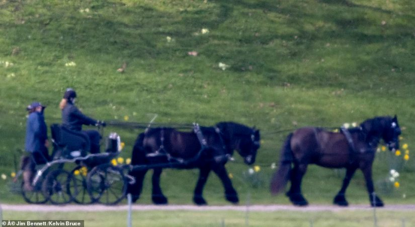 Lady Louise Windsor (pictured), 17, paid a touching tribute to her grandfather Prince Philip today as she was spotted out carriage driving in the grounds of Windsor Castle on the morning of his death. She may attend his funeral