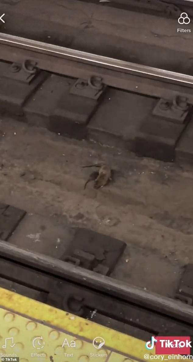 Couple of rats have been spotted flying on NYC subway tracks