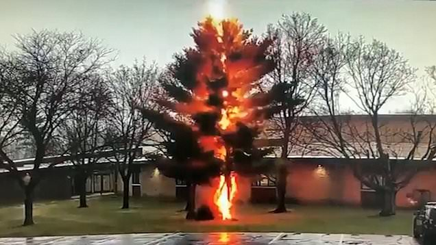 Watch lightning bolt shatter entire tree in seconds