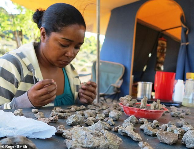 Zaituna Skosan, Collections Manager at Iziko Museum in Cape Town, South Africa, glues together a broken up fossil during fieldwork in the Karoo Basin