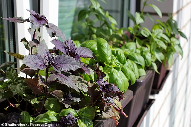 Window boxes are also great for growing edibles such as herbs or salad crops