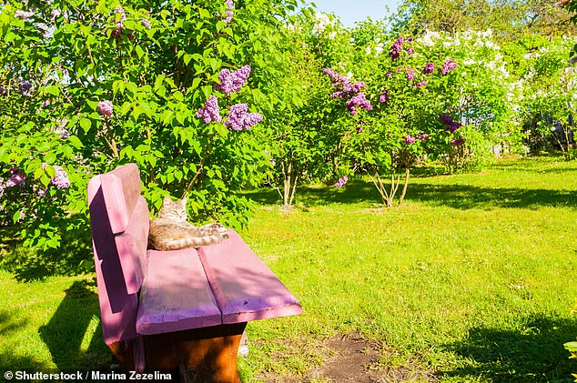 Lovely lilac trees: owners of larger gardens should try and keep their spaces wild and buzzing with biodiversity