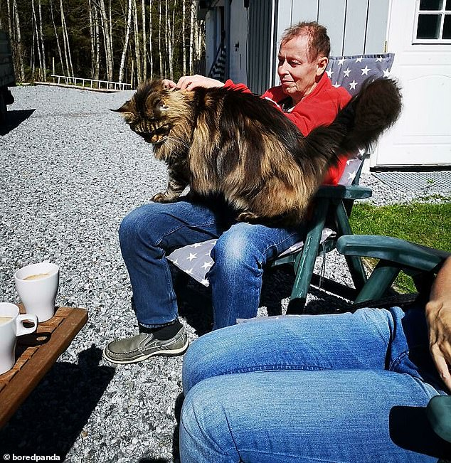 Another user, from an unknown location, sat in the back garden on a plastic dining chair as their large cat sat on their lap and they stroked his neck