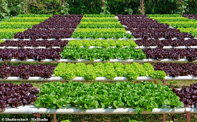 Feeding the world: How will agriculture develop in the coming decade