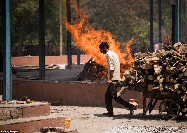 India's healthcare system is buckling under the strain of a vicious second wave. Pictured: A cemetery worker pulls a cart of wooden logs to be used in funeral pyres