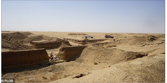 A gold rush in the eastern Sahara has led to numerous open-cast mines being excavated, giving archaeologists a rare opportunity to examine exposed layers of sediment