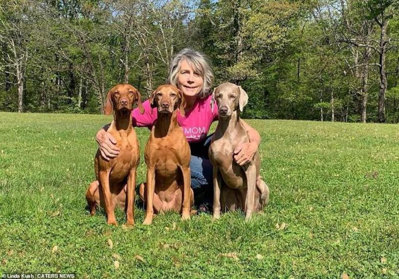 The pawfect friends: Linda often takes fun pictures of her dogs to cheer up her social media followers