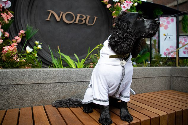 The dog robes are available at Tielleloveluxury.co.uk, with prices ranging from £15 to £22. The robes are available to guests upon request at London hotel Nobu Hotel London Portman Square (pictured)