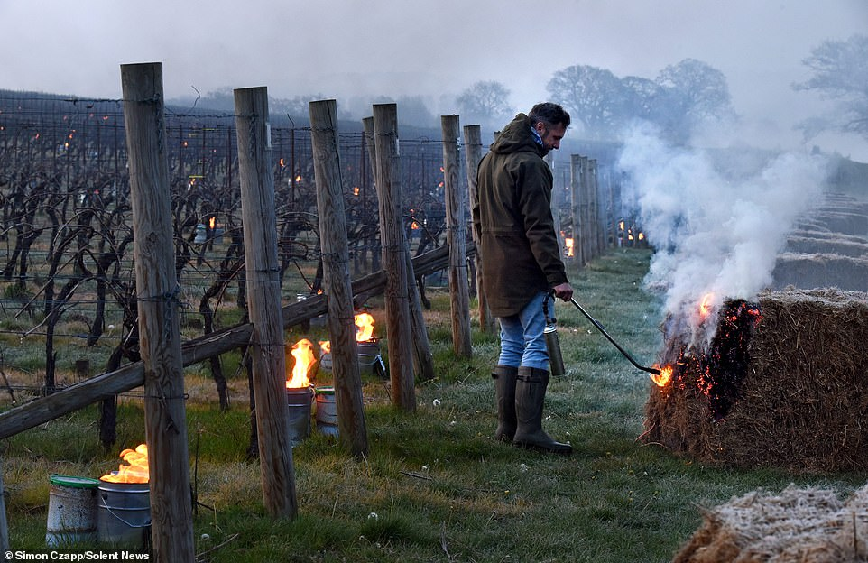 Vitaculturists at The Grange Hampshire vineyard lit their candles, known as bougies, in the early hours of this morning during a period of frost