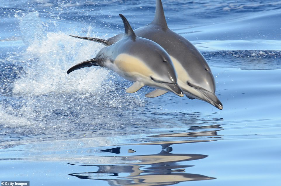 The Azores is one of the best places to spot dolphins and whales, including blue whales and humpbacks