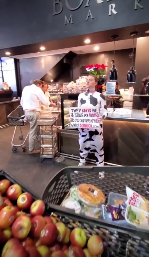 Tash Peterson, 26, became known for the public antics when she dressed as a cow outside a butcher at the Boatshed Markets at Cottesloe, in Perth