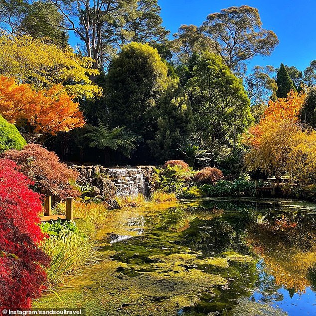 There are six private gardens located at Mount Wilson in the Blue Mountains of New South Wales, two hours west of Sydney's CBD. Pictured: Windyridge Gardens