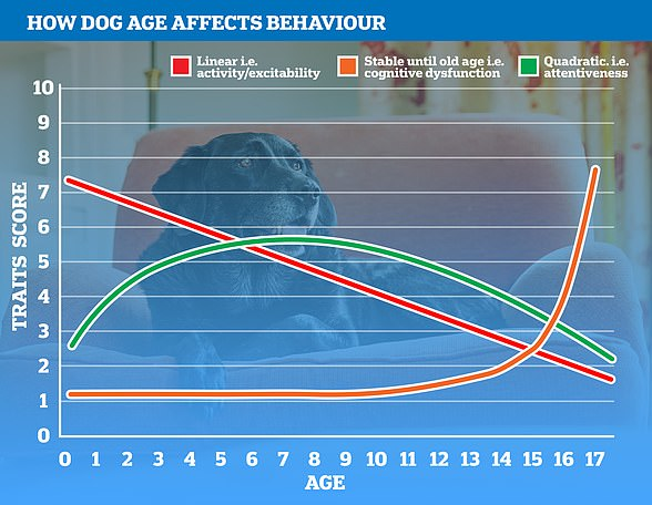 Pictured, how various metrics alter a dog's behaviour over time. Green shows how the brain develops and then starts declining in senior years; orange shows how some traits, like cognitive decline, increase exponentially in a dog's geriatric years; red shows the slow decline in a dog's activity and attentiveness