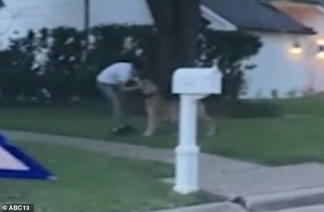 A man grabs the animal by the collar and takes it back into a house