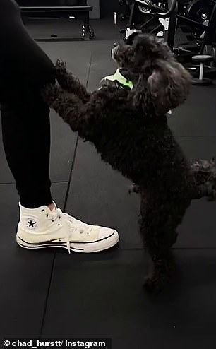 Cutest moment in the video came when Hurst's poodle placed his front paws on Chad's knee as he trained