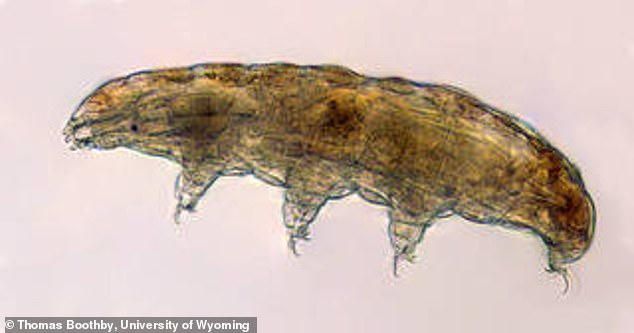 Tardigrades are microscopic water-dwelling animals capable of surviving harsh environments on both Earth and in space – and scientists say this ability could help safeguard astronauts