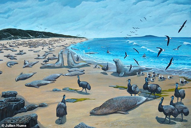 An artist's illustration of dwarf emus and sea elephants on King Island. Dwarf emus went extinct by 1822
