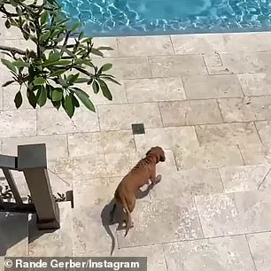 Playtime: The pooch jumped down towards the water