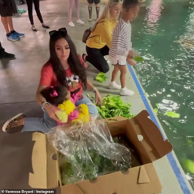 Feeding:Bryant also shared a video where both Bianka and Capri, a.k.a. Koko, were tossing leaves of lettuce into a pool for a number of large turtles and other animals to eat