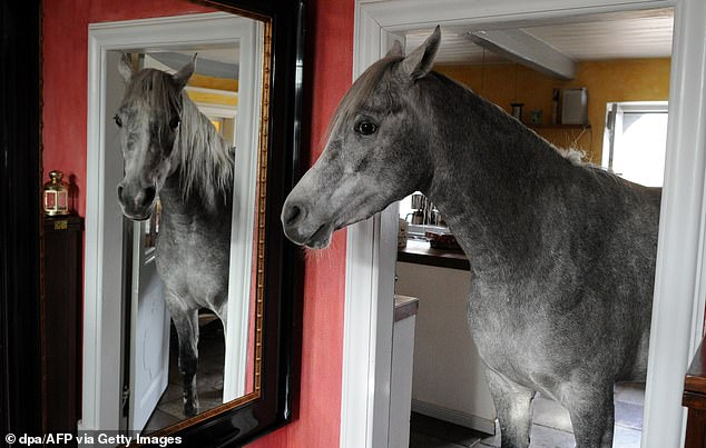 Real estate agents have the revealed the most bizarre things they have seen while showing off other people's homes, including a horse living in a town house (stock image)