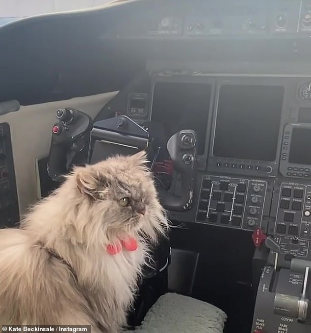 'Alright Captain, where are we doing to today?': Kate Beckinsale shared a hilarious video of her cat Clive 'flying a plane' on Instagram on Sunday