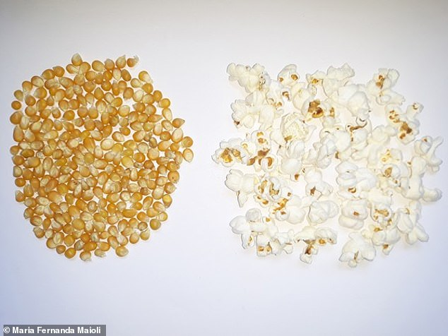 The study looked at how popcorn characteristics relate to the expansion of a kernel with the hopes of improving the iconic treat and identifying which kernels have 'good popping quality.' Pictured are yellow kernels and popcorn, which are commonly used by movie theaters