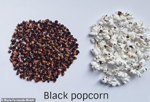 After analyzing 49 different types, scientists determined that the greatest popping expansion depends on how thick the kernel's outer layer is. Black popcorn is packed with anti-inflammatory and antioxidant benefits
